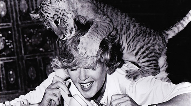 tippi hedren 1981, american actress, 1980s movies, roar, big cats, baby tiger, wildlife conservation, shambala nature preserve