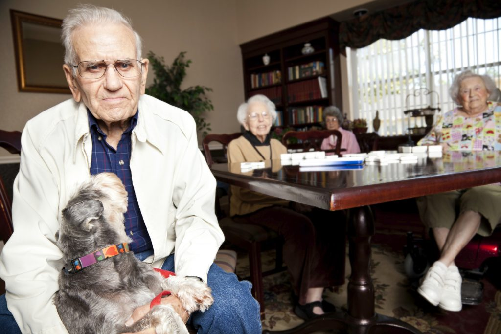 dogs for seniors, elderly adults, older adults, retirement residences, seniors apartment buildings