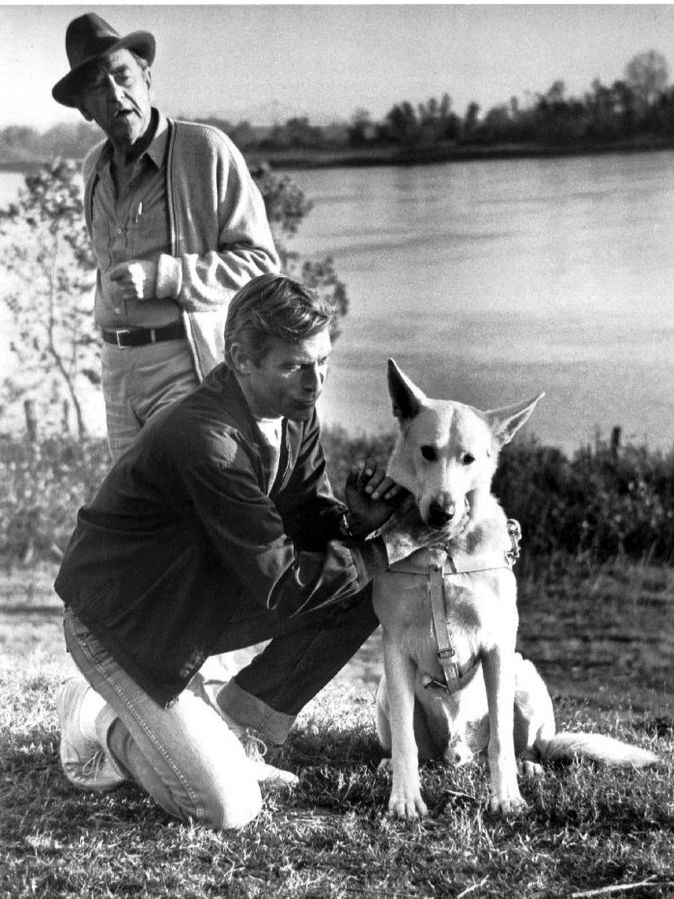 longstreet tv show 1971, james franciscus, mike longstreet, private detective, blind, guide dog pax, counselor john mcintire