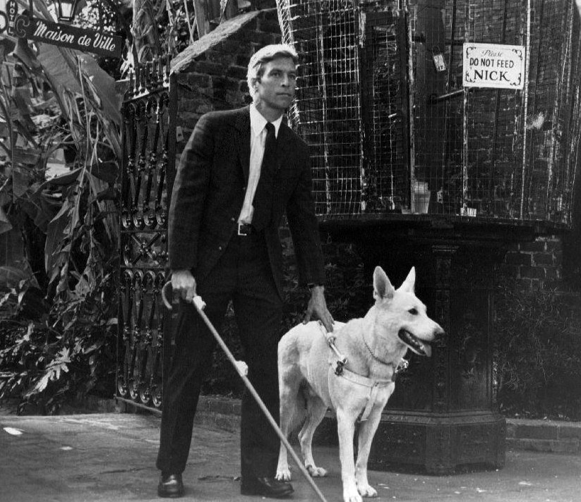 longstreet tv show, 1971 tv series, 1972 television show, actor james franciscus, mike longstreet, blind detective, guide dog pax, seeing eye dog, animal actor