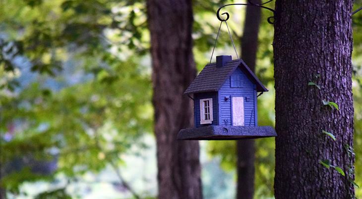bird house, backyard, houses, wild birds, purple,