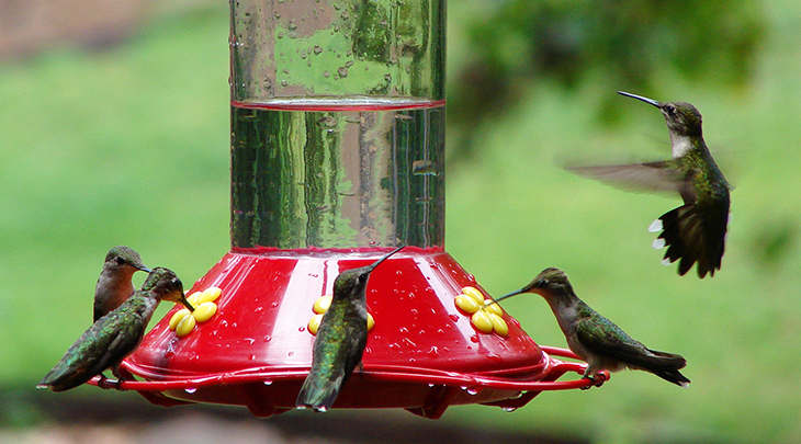 hummingbird feeder, bird feeders hummingbird,red hummingbird bird feeder,