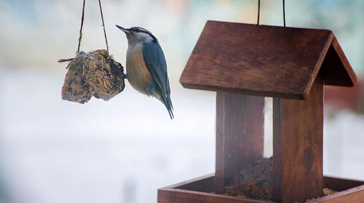 suet feeder, bird feeders, wild birds, covered bird feeder, platform feeder, nuthatch, small birds, suet ball