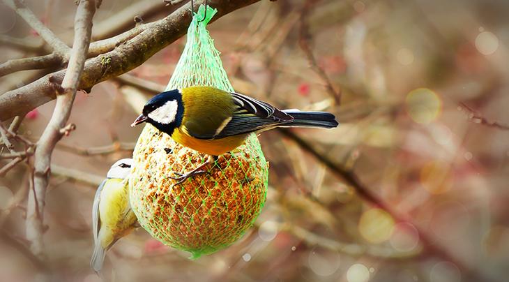 suet feeder, suet ball, bird feeders, wild birds, great tit