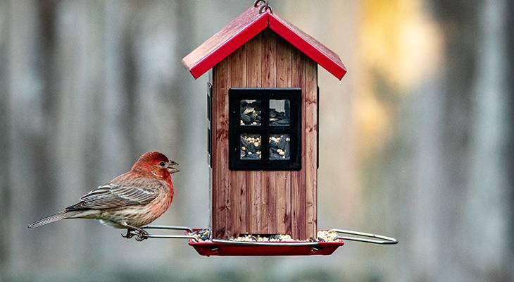 tube bird feeders, tube shaped bird feeders, bird house feeder, wild birds, male house finch, red head bird
