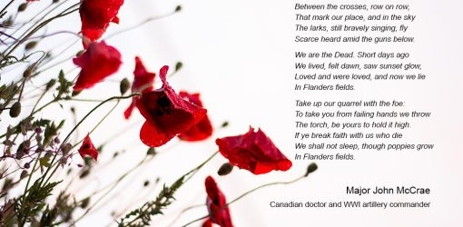 remembrance day, in flanders fields poem, poppies, never forget, lest we forget, do not forget, veterans day