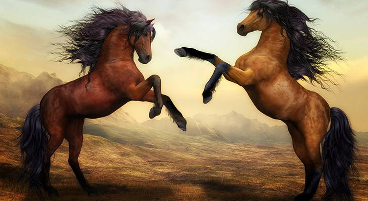horses, bay stallions, chestnut horses, horses rearing, horses fighting, favorite horse movies, movies for horse lovers