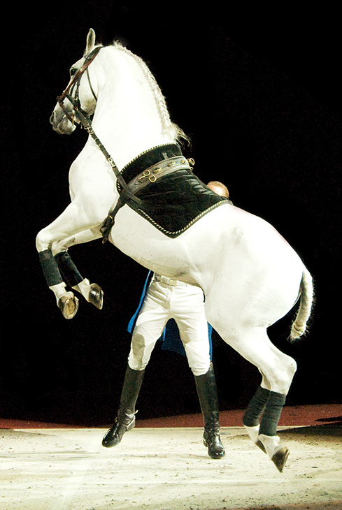 lipizzaner stallion, white stallion, white horse, favorite horse movies, the miracle of the white stallions,