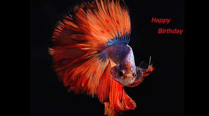 seniors birthdays, older adult birthdays, 50 plus birthdays, 55 plus birthdays, 60 plus birthdays, generation x birthdays, baby boomer birthdays, zoomer birthdays, happy birthday, senior citizens, centenarian, nonagenarian, octogenarian, septuagenarian, senior celebrity birthdays, famous people birthdays, remembering, in memory of, memorial, birthday card, birthdays on this day, betta fish, animals, colorful fish, siamese fighting fish, orange fish