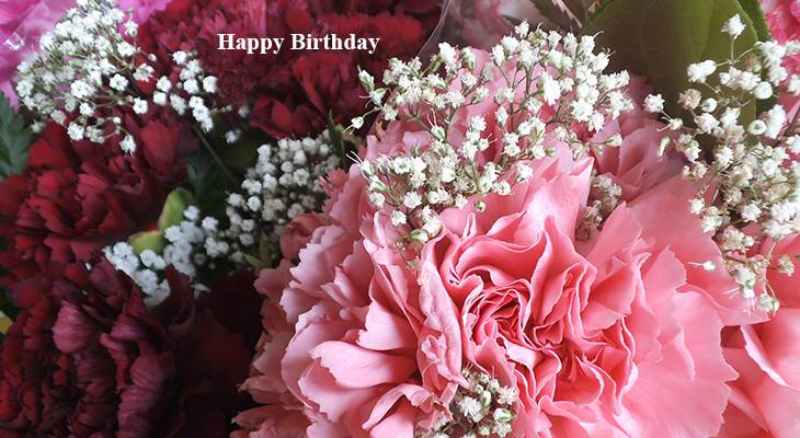seniors birthdays, older adult birthdays, 50 plus birthdays, 55 plus birthdays, 60 plus birthdays, generation x birthdays, baby boomer birthdays, zoomer birthdays, happy birthday, senior citizens, centenarian, nonagenarian, octogenarian, septuagenarian, senior celebrity birthdays, famous people birthdays, remembering, in memory of, memorial, birthday card, birthdays on this day, pink carnations, white flowers, babys breath, red carnations, red and white flowers, flower bouquet, floral arrangements, birthday flowers,