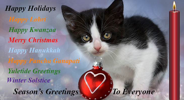 merry christmas card, happy holidays card, seasons greetings card, happy lohri card, happy kwanzaa card, happy hanukkah card, happy pancha ganapati card, yuletide greetings card, winter solstice card, seasons greetings card, multinational holiday greetings card, christmas kitten, happy new year wishes, christmas cat
