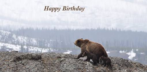 happy birthday wishes, birthday cards, birthday card pictures, famous birthdays, brown bear, bear cubs, baby animals, wild animal
