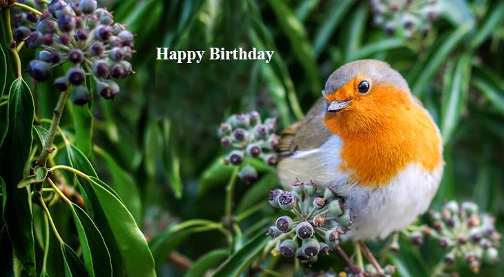 happy birthday wishes, birthday cards, birthday card pictures, famous birthdays, european robin, wild birds, orange bird,