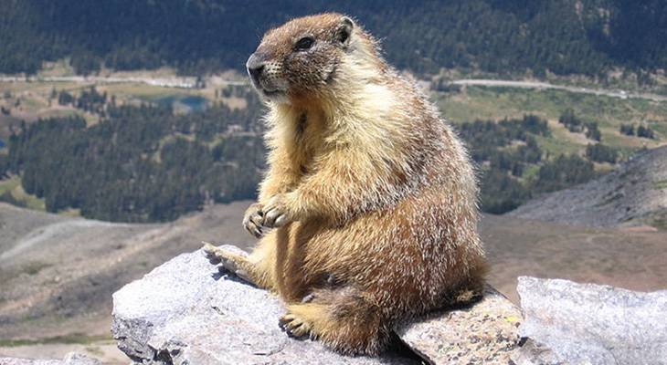 groundhog day, ground hog day, february 2nd, six more weeks of winter, punxsutawney phil, punxsutawney pennsylvania, staten island chuck, wiarton willie, wiarton ontario, shubenacadie sam, shubenacadie nova scotia, winter predictions, early spring predictions, name the groundhog