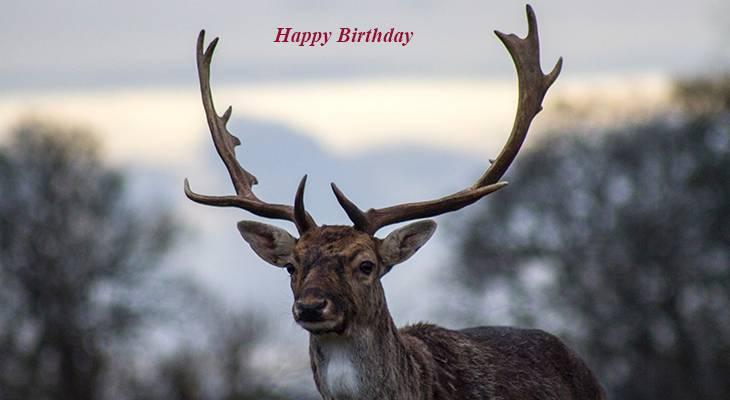 happy birthday wishes, birthday cards, birthday card pictures, famous birthdays, deer, elk, wild animals, buck, antlers