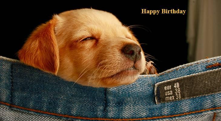seniors birthdays, older adult birthdays, 50 plus birthdays, 55 plus birthdays, 60 plus birthdays, generation x birthdays, baby boomer birthdays, zoomer birthdays, happy birthday, senior citizens, centenarian, nonagenarian, octogenarian, septuagenarian, senior celebrity birthdays, famous people birthdays, remembering, in memory of, memorial, birthday card, birthdays on this day, animals, dog, puppy, puppies, dogs
