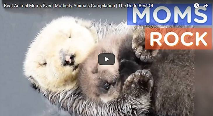 happy mothers day, best mothers day videos, best animal moms, protective animal mothers, loving animal mothers, mothers day humor, a mothers revenge, mom to teenagers, grandmothers humour, giant panda moms, choosing your grandma name, loving grandmothers, sweet motherly pets, adoptive mothers, sports moms