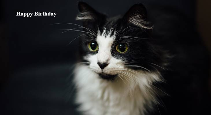 happy birthday wishes, birthday cards, birthday card pictures, famous birthdays, black and white, cat, animal, kitten