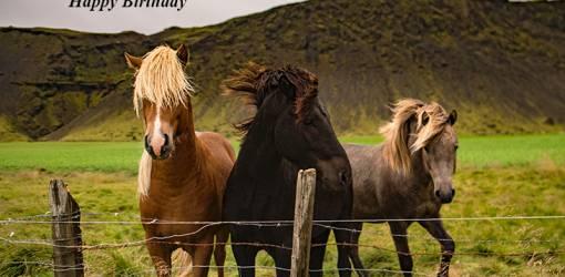 happy birthday wishes, birthday cards, birthday card pictures, famous birthdays, wild horses, palomino, black horse, grey, nature