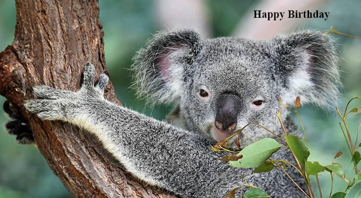seniors birthdays, older adult birthdays, 50 plus birthdays, 55 plus birthdays, 60 plus birthdays, generation x birthdays, baby boomer birthdays, zoomer birthdays, happy birthday, senior citizens, centenarian, nonagenarian, octogenarian, septuagenarian, senior celebrity birthdays, famous people birthdays, remembering, in memory of, memorial, birthday card, birthdays on this day, wild animals, nature scenery, koala bear, koala cub, australian animals, baby animals