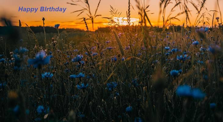 happy birthday wishes, birthday cards, birthday card pictures, famous birthdays, blue flowers, meadow, sunset, wildflowers, sunrise