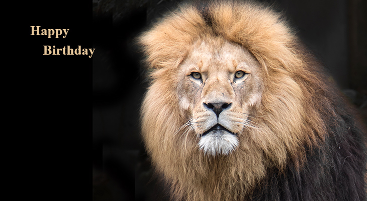 happy birthday wishes, birthday cards, birthday card pictures, famous birthdays, wild animals, lions, big cats