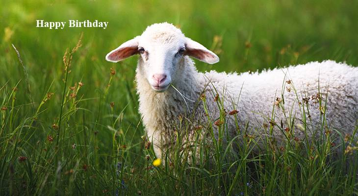 happy birthday wishes, birthday cards, birthday card pictures, famous birthdays, nature scenery, animals, sheep, lamb, slovenia