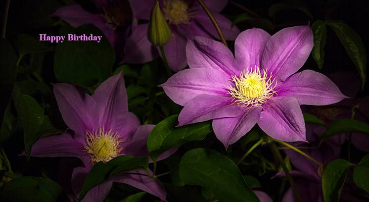 happy birthday wishes, birthday cards, birthday card pictures, famous birthdays, pink flowers, pink clematis, summer flowers