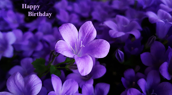 happy birthday wishes, birthday cards, birthday card pictures, purple flowers, bellflowers, campanulla, periwinkles, famous birthdays