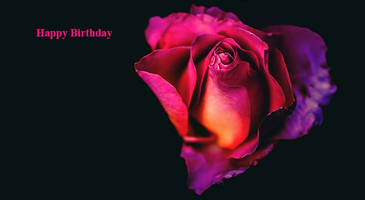happy birthday wishes, birthday cards, birthday card pictures, famous birthdays, red rose, red flowers, pink roses, single rose