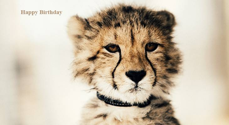 happy birthday wishes, birthday cards, birthday card pictures, famous birthdays, wild animals, baby cheetahs, big cats, cheetah cub