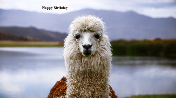 happy birthday wishes, birthday cards, birthday card pictures, famous birthdays, llamas, peru animals, nature scenery, alpaca like