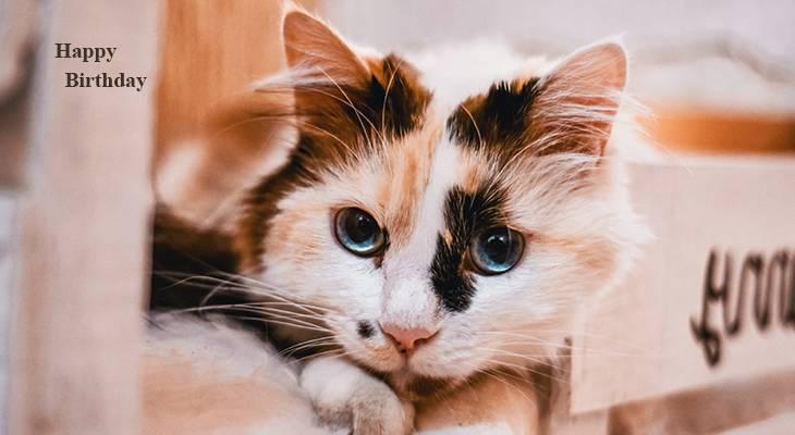 happy birthday wishes, birthday cards, birthday card pictures, famous birthdays, animals, tortoiseshell cat, calico kitten