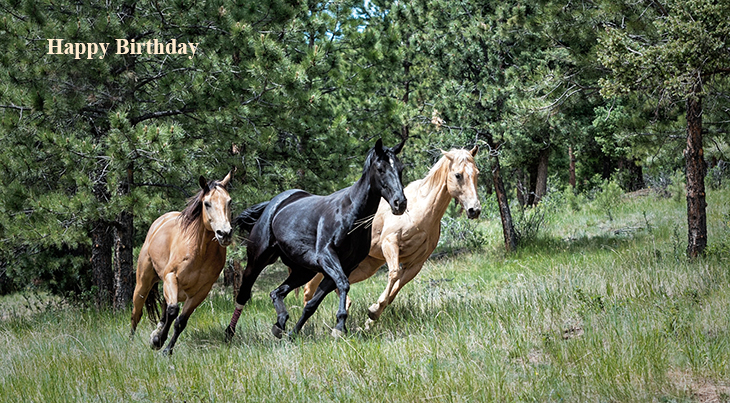 happy birthday wishes, birthday cards, birthday card pictures, famous birthdays, wild horses, black stallion, animals