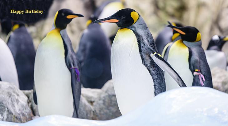 happy birthday wishes, birthday cards, birthday card pictures, famous birthdays, emperor penguins, wild birds, nature scenery, wild animals