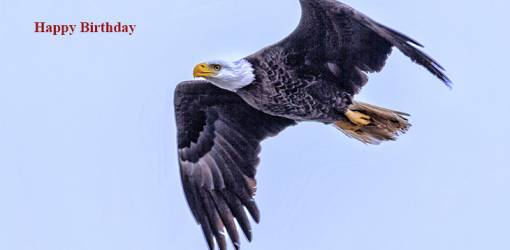 happy birthday wishes, birthday cards, birthday card pictures, famous birthdays, wild bird, bald eagle, flying
