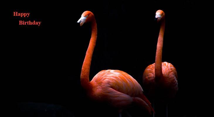 happy birthday wishes, birthday cards, birthday card pictures, famous birthdays, wild birds, pink flamingos, pink birds, batu secret zoo indonesia
