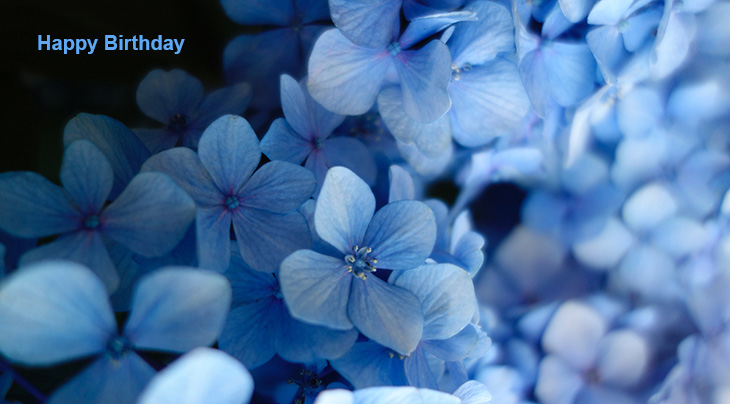 happy birthday wishes, birthday cards, birthday card pictures, famous birthdays, blue flowers, blue hydrangeas