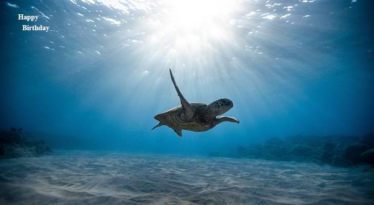 happy birthday wishes, birthday cards, birthday card pictures, famous birthdays, sea turtle, wild animals, ocean reptiles, big turtles