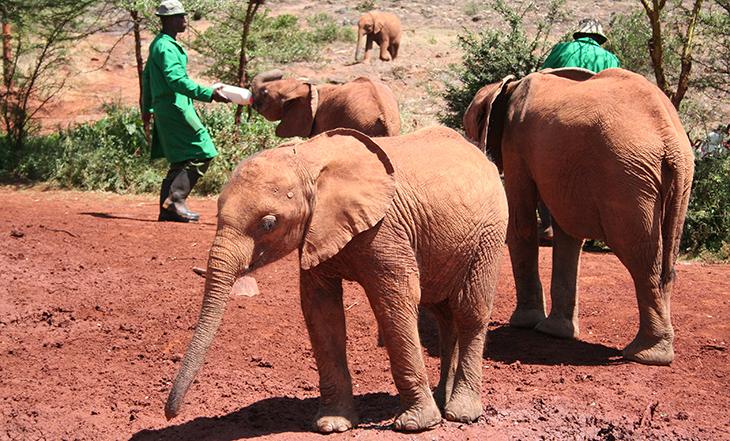 david sheldrake wildlife trust, kenya africa, baby elephants, africa wildlife conservation, elephant sanctuary