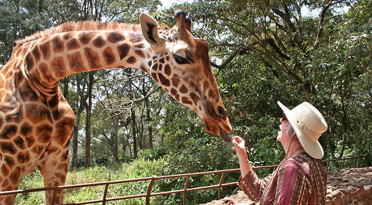 giraffe santuary centre, rothschilds giraffes sanctuary, kenya africa, jock leslie melville giraffe centre, african conservation education programs, feeding giraffes