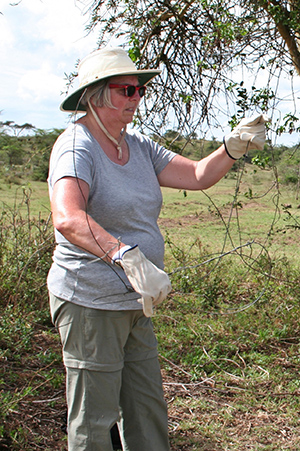 soysambu conservancy, kenya african conservation programs, marilyn mcgrath, clearing wildlife snares, conservation volunteering