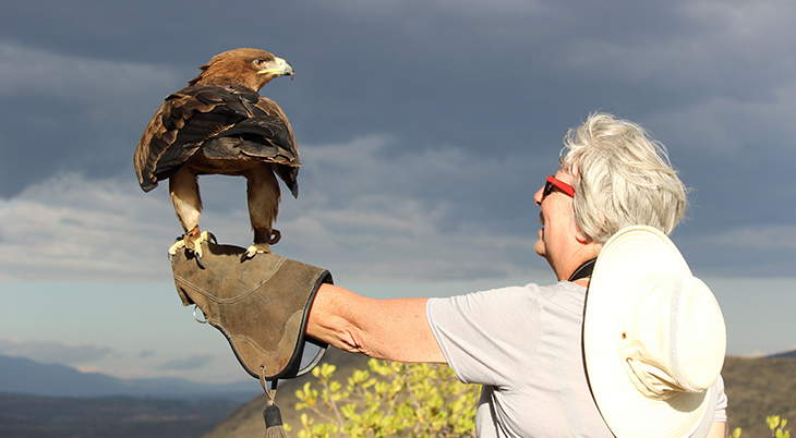 african tawny eagle, african wild eagles, african birds, soysambu raptor centre, soysambu conservancy, kenya africa, volunteering vacation, ethical volunteering