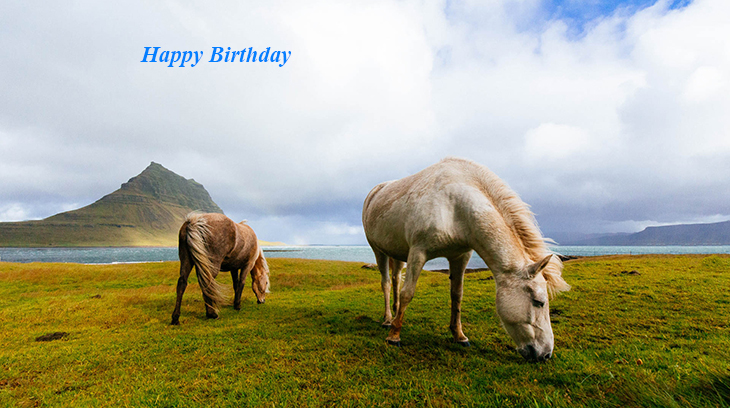 happy birthday wishes, birthday cards, birthday card pictures, famous birthdays, animals, horses, nature scenery