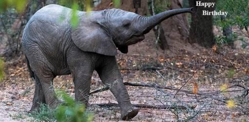 happy birthday wishes, birthday cards, birthday card pictures, famous birthdays, wild animals, baby elephant, african elephants