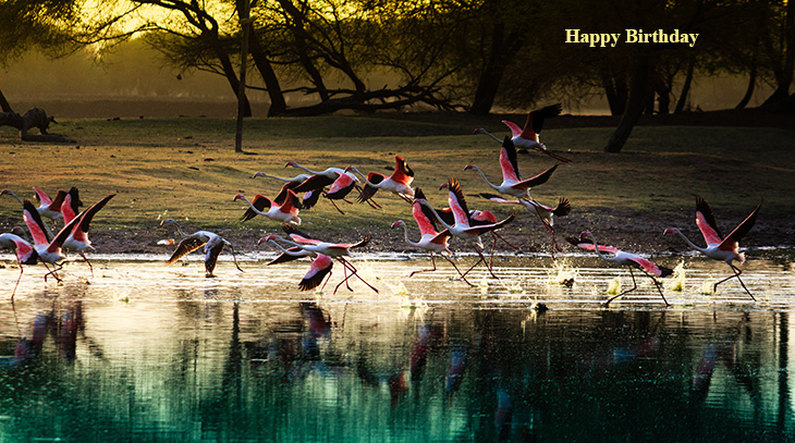 happy birthday wishes, birthday cards, birthday card pictures, famous birthdays, pink flamingos, wild birds, nature scenery