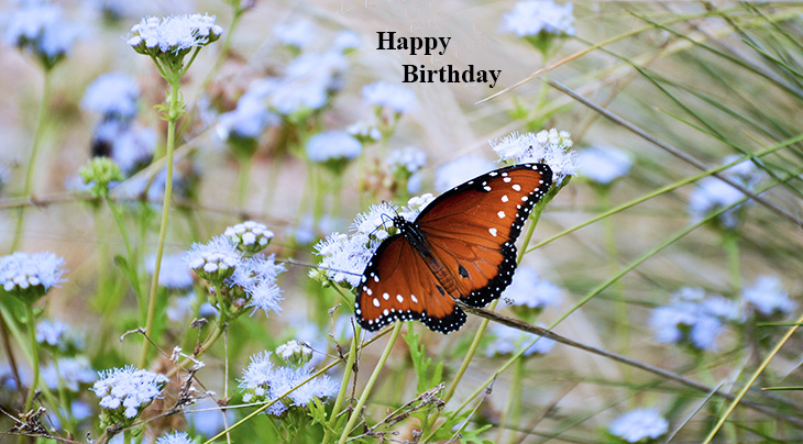 happy birthday wishes, birthday cards, birthday card pictures, famous birthdays, blue wildflowers, monarch butterfly, nature scenery
