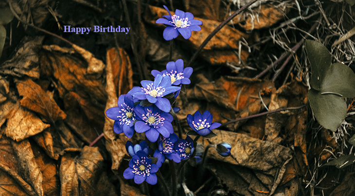 happy birthday wishes, birthday cards, birthday card pictures, famous birthdays, purple clematis, purple flowers, blue vines