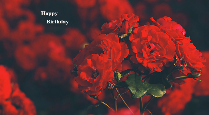happy birthday wishes, birthday cards, birthday card pictures, famous birthdays, red roses, red flowers, rose field, vienna austria