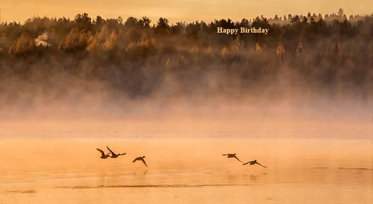 happy birthday wishes, birthday cards, birthday card pictures, famous birthdays, wild birds, geese, finland scenery, nature scene, rovaniemi